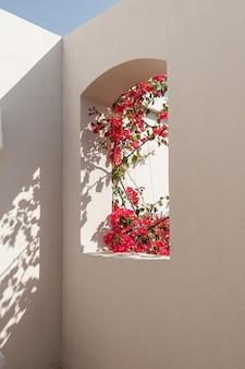 Schöne tropische pflanze mit roten blüten im beigen gebäudefenster mit sonnenlichtschatten