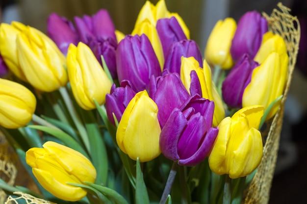 Schöne tulpen auf kanadischem tulip festival in ottawa