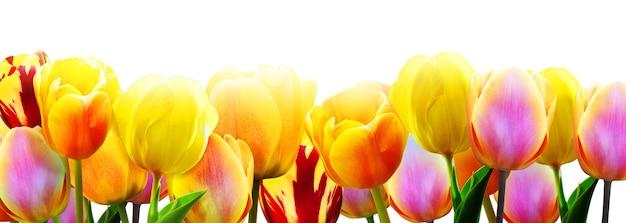 Schöne tulpen. frühlingsnaturhintergrund für webbanner und kartendesign.