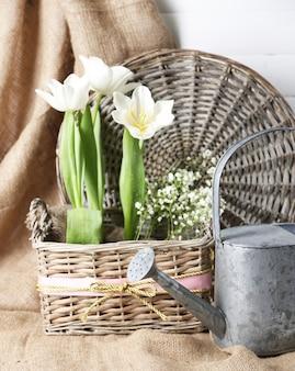 Schöne tulpen im weidenkorb, auf farbigem hölzernem hintergrund
