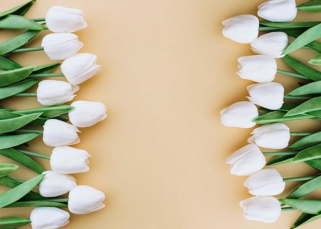 Schöne tulpen in zwei spalten mit platz in der mitte platziert