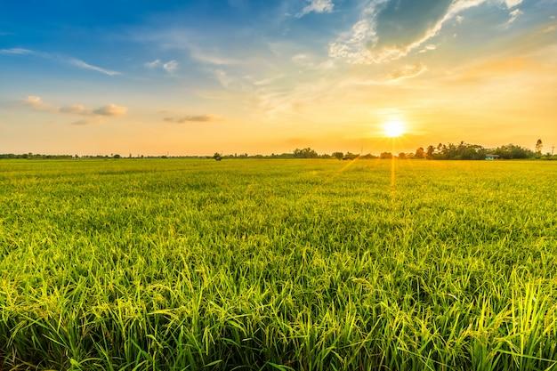 Schöne umgebungslandschaft des grünen feldes