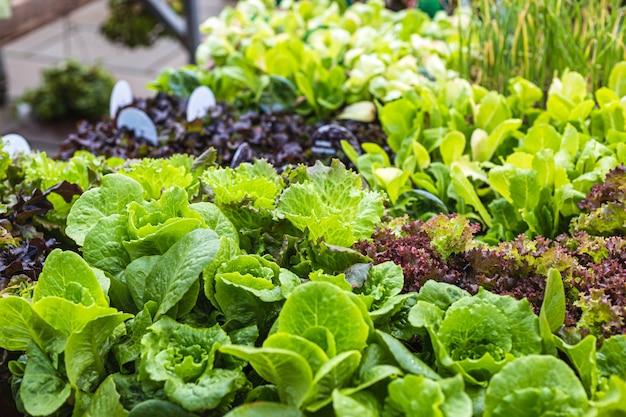 Schöne und frische auswahl an salaten zum verkauf in einem gartencenter