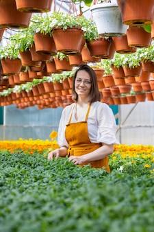 Schöne und junge erwachsene kaukasische gärtnerin in einem gewächshaus oder einer gärtnerei kümmert sich um
