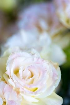 Schöne und leichte rosa eustomablumen, lisianthus, tulpenenzian, eustomaschablone.