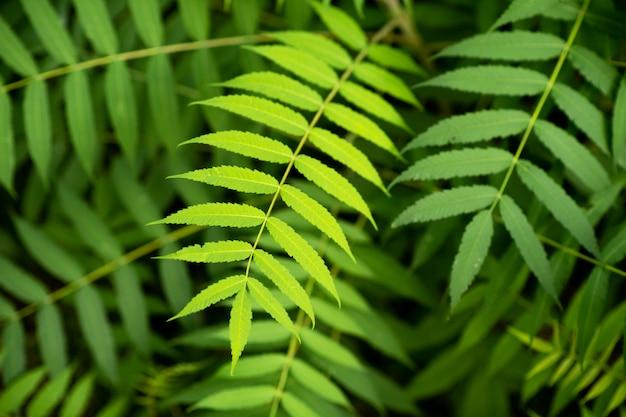 Schöne und strukturelle, grüne und saubere pflanzenblätter
