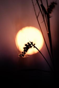 Schöne unschärfeblume und bokeh mit sonnenlicht.