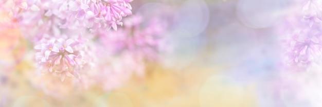 Schöne unscharfe gelb-rosa designgrenze der lila blumen mit bokeh für einladung oder grußkarte. verschwommene lila zweige nahaufnahme. weicher fokus. kopieren sie platz für text. breites banner.