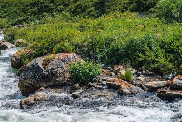 Schöne vegetation nahe gebirgsbach im sonnenlicht. große felsbrocken in nahaufnahme des schnellen wasserstroms