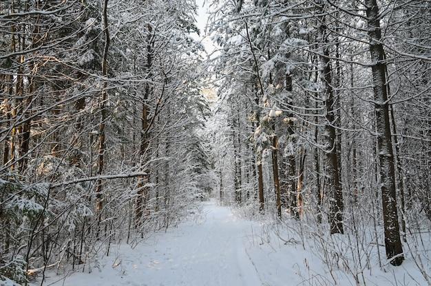 Schöne verschneite landschaft