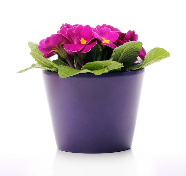 Schöne violette blüten