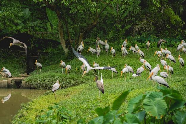 Schöne vögel im tropischen zoo.