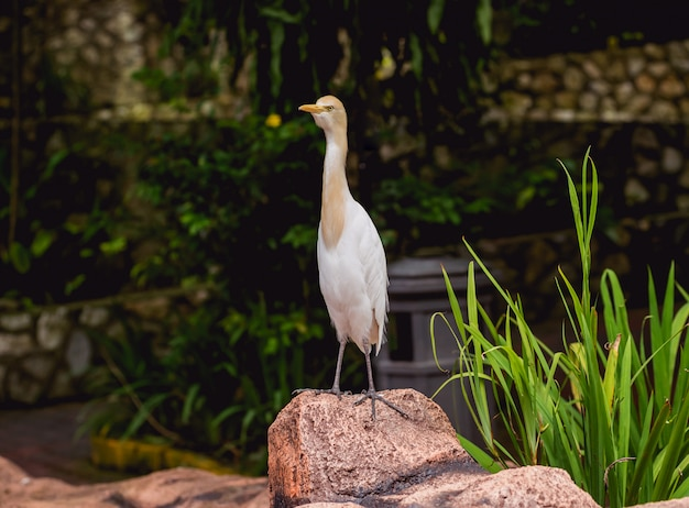 Schöne vögel im tropischen zoo