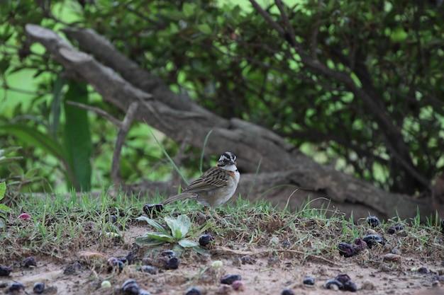 Schöne vogel gasthaus natur nahaufnahme detail