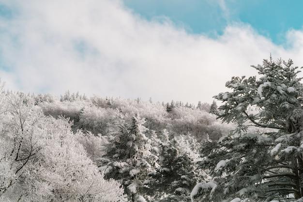 Schöne wald- und baumbedeckung mit schnee im zao-berg sendai japan