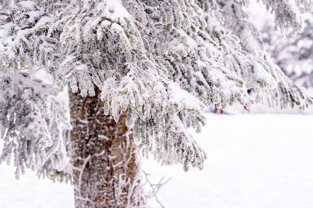 Schöne wald- und baumbedeckung mit schnee