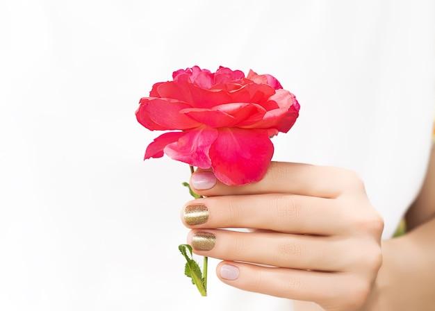 Schöne weibliche hand mit perfektem goldenen nageldesign, das blühende rote rosenblume hält.