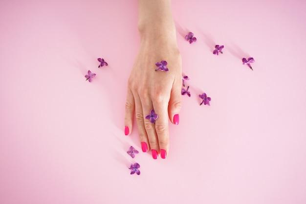 Schöne weibliche hand und lila blumen auf einem rosa hintergrund, flache lage. schönheits- und hautpflegekonzept. schöne maniküre