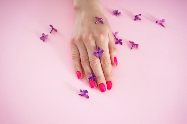 Schöne weibliche hand und lila blumen nahaufnahme auf einem rosa hintergrund. schönheits- und hautpflegekonzept. schöne maniküre