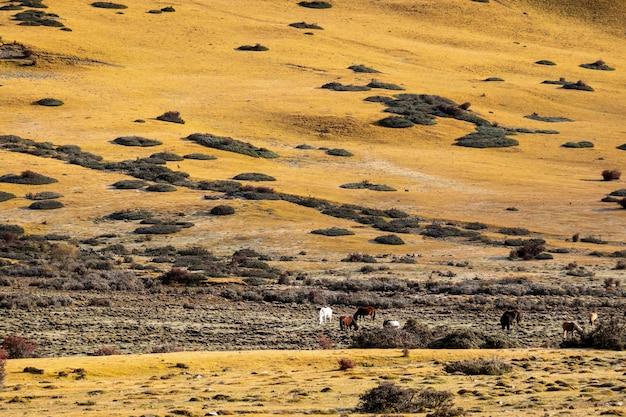 Schöne weide und pferde, breite ansicht von den weiden lassenden pferden