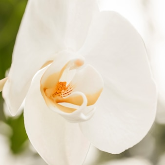 Schöne weiße blüte mit gelber mitte