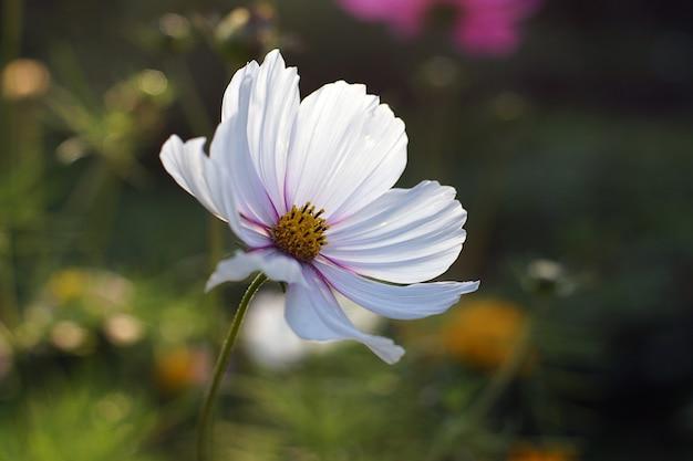 Schöne weiße blume blühte im garten.