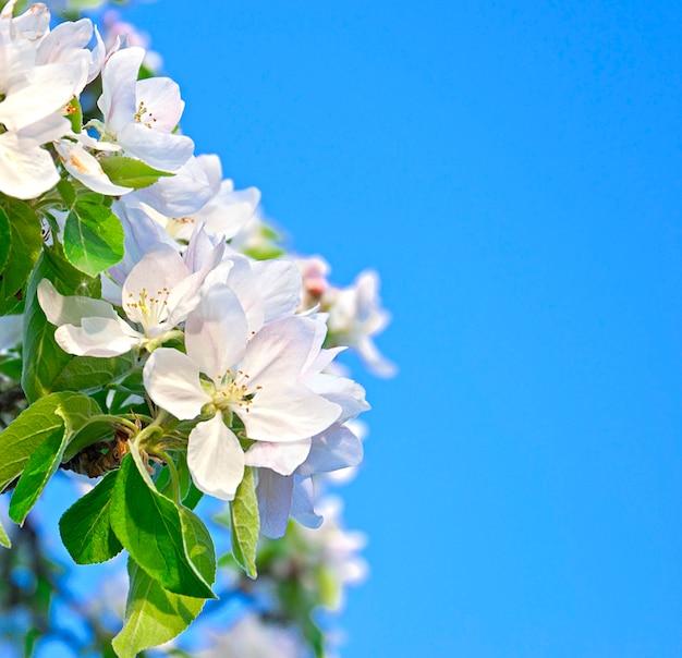 Schöne weiße blumen auf blauem himmel
