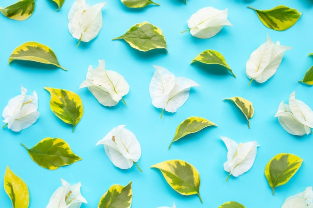 Schöne weiße bouganvillablume mit grünem gelb lässt nahtloses muster.