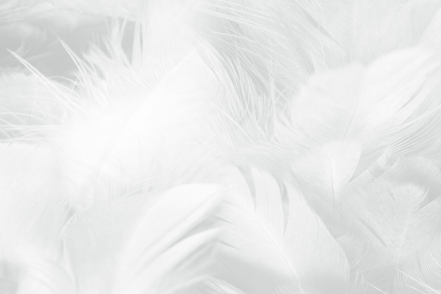 Schöne weiße feder wollmuster textur hintergrund