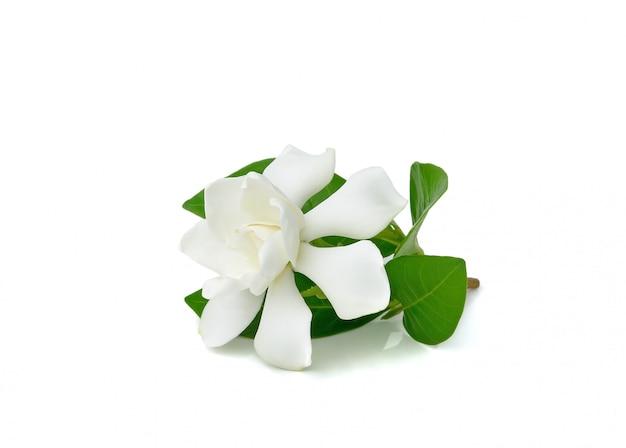 Schöne weiße gardenienblume