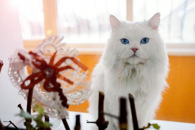 Schöne weiße katze, die auf dem fenster und dem weißen hochzeitsstrumpfband mit roter blume sitzt