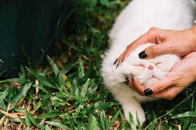 Schöne weiße katze in der natur