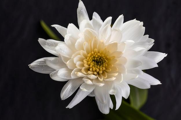 Schöne weiße makroblume