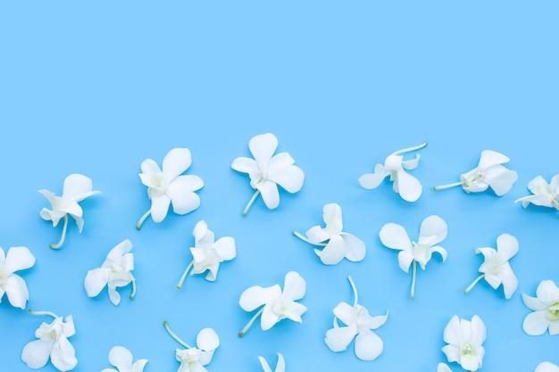 Schöne weiße orchideenblüten auf blauem hintergrund.