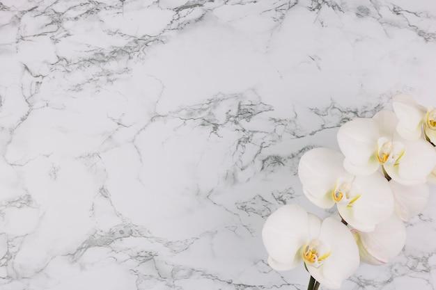 Schöne weiße orchideenniederlassung auf strukturiertem hintergrund des marmors