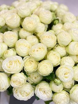 Schöne weiße pfingstrosenförmige buschrosen. zarter frühlingsstrauß aus weißen blumen, romantik