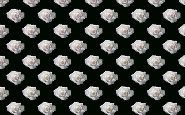 Schöne weiße rosenblüten. blühende rosen nahtlose muster. natürlicher mit blumenhintergrund.