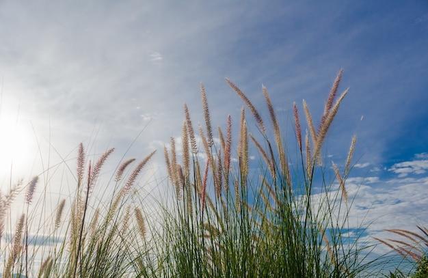 Schöne wiesen und blauer himmel