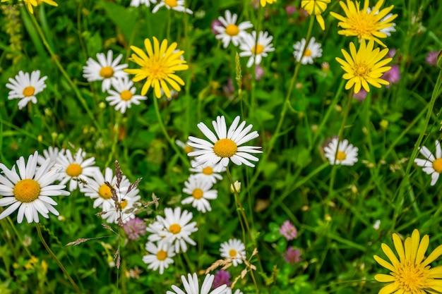 Schöne wildblumen wachsen auf einer wiese am fuße der berge