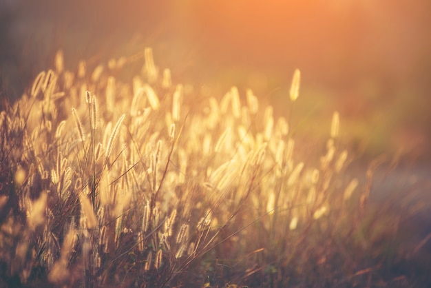 Schöne wilde blume, sonnenuntergang
