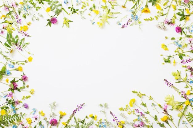 Schöne wilde blumen auf weißem hintergrund