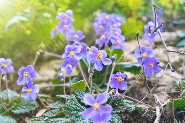 Schöne wilde blumen violett im wald