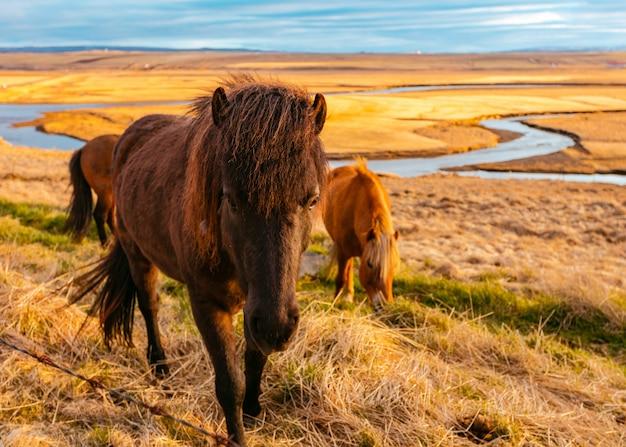 Schöne wilde ponys auf dem feld