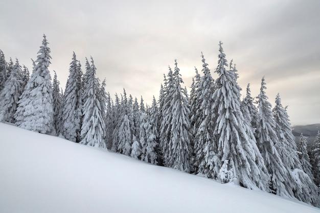 Schöne winterberglandschaft. hohe fichtenbäume bedeckt w