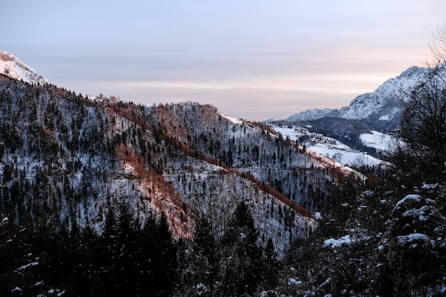 Schöne winterlandschaft eines bergabhangs bedeckt mit alpinen bäumen