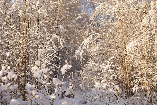 Schöne winterlandschaft im verschneiten park.