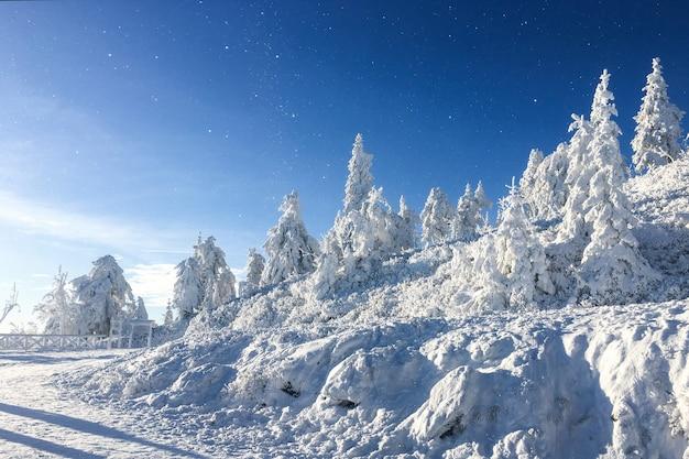 Schöne winterlandschaft mit schneebedeckten bäumen auf einem blauen himmel