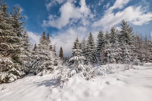 Schöne winterlandschaft mit schneebedeckten bäumen im wald, im weißen schnee und im blauen himmel