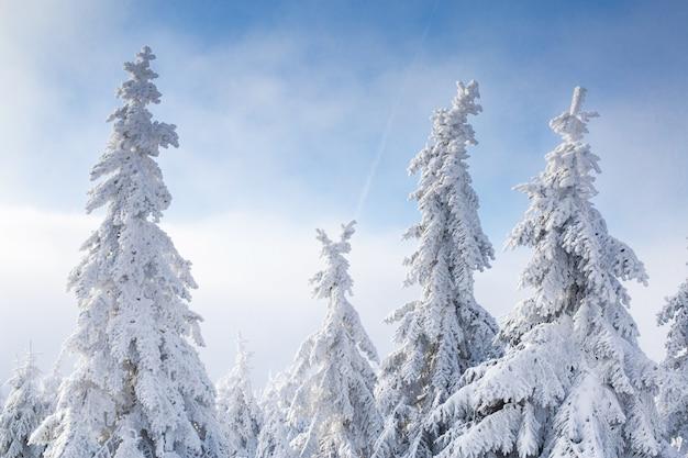 Schöne winterlandschaft mit schneebedeckten bäumen.