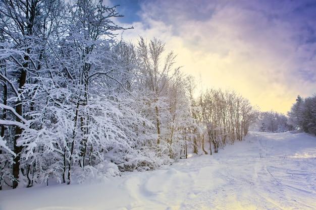 Schöne winterlandschaft, schneebedeckte bäume bedeckt mit raureif vor dem hintergrund des sonnenlichts und des blauen himmels. berglandschaft.